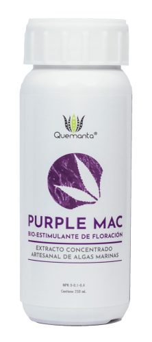purple-mac-web